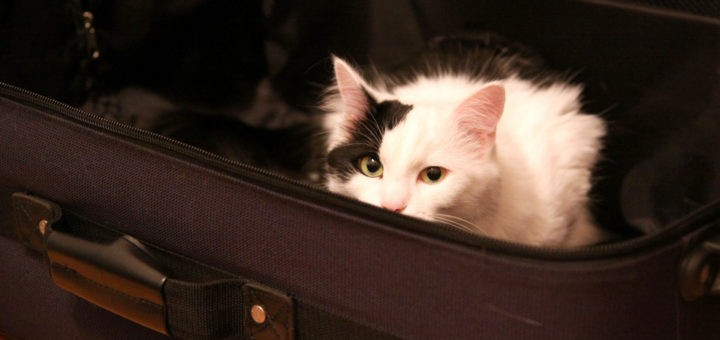 valise+chat